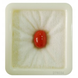 Lab Certified Red Coral Fine 6+ 4ct